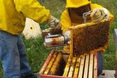 agriturismo la mongolfiera - lavorazione del miele