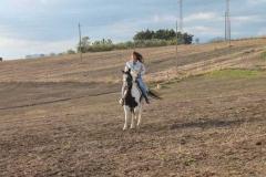 agriturismo la mongolfiera - equitazione Sannio
