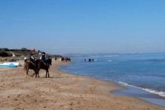 agriturismo la mongolfiera - equitazione cavalli mare