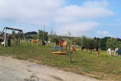 agriturismo la mongolfiera - equitazione cavalli