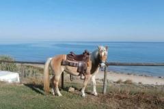 agriturismo la mongolfiera - equitazione mare