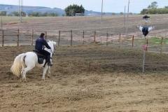 agriturismo la mongolfiera - equitazione palio cavalli